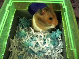 hamster reused paper